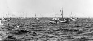 1950-åra. Sulværings-båter på Lofothavet.